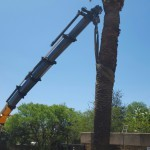 crane lifting large tree