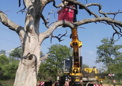 preparing crane to lift tree