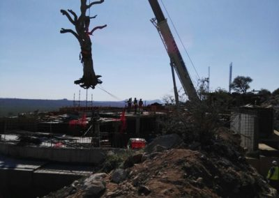 crane lifting a tree