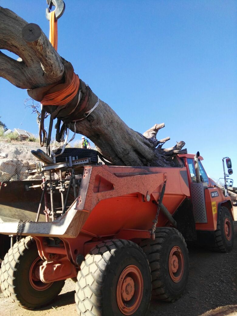 Crane Hire South Africa | Crane Trucks, Rigging, Mobile Cranes